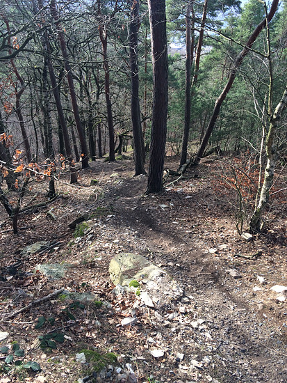 Trailspaß am Südhang, Trails Horchheimer Höhe und Lichter Kopf, Canyon Spectral AL 7.9