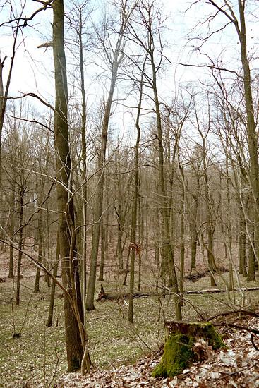 Wald :-D