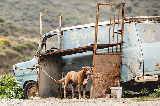 Allgemein sind wir recht froh, dass alle Hunde in Griechenland angeleint sind