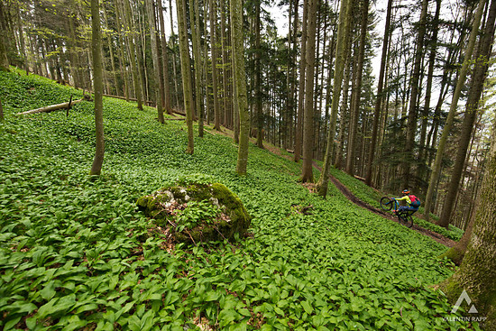 Bärlauch Trail