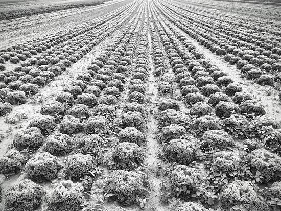 Agrarkultur - Heute