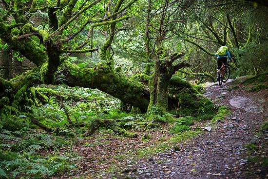UK Dalbeattie Forest - Moyle Magic