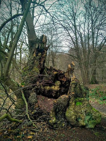 Totes Holz und kaltes Gestein