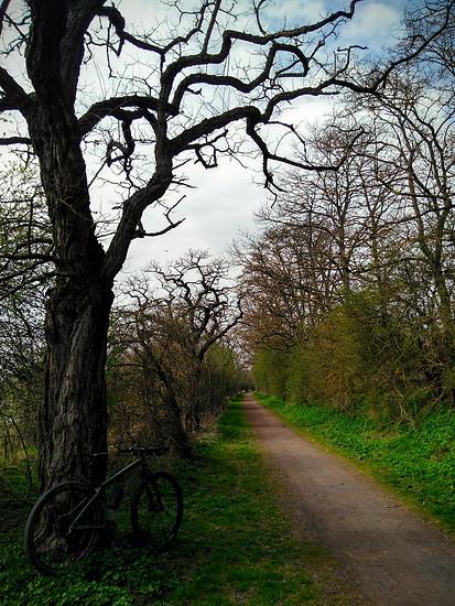 Trail-O-Rama
