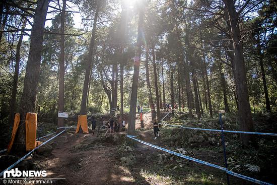 Die Waldsektion ist zwar kurz und eher flach