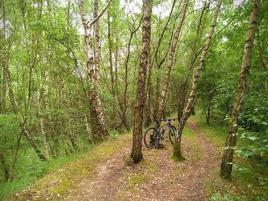 Waldlandschaft III