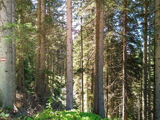 Wald : A