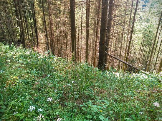Wald : D