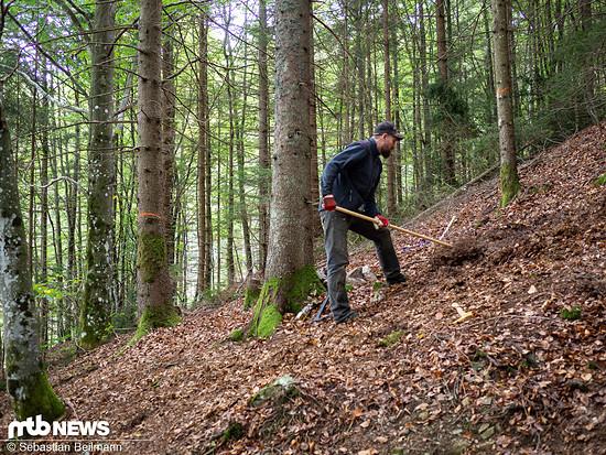 ... frisch in den Wald gegraben wurde