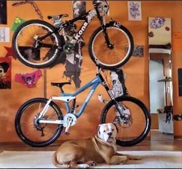 Mein American Bulldog-Mein DH-Stinky-Mein Hardtail