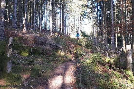 Blackforest Trail 1