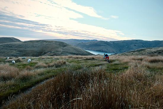 Keine Neuseeland-Story ohne Schafe!