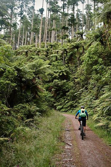 Uphill durch den Dschungel