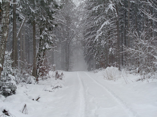 456 Schnee 5