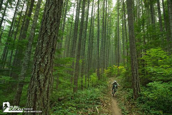 Wer würde nicht gerne mal durch einen solchen Wald fahren?