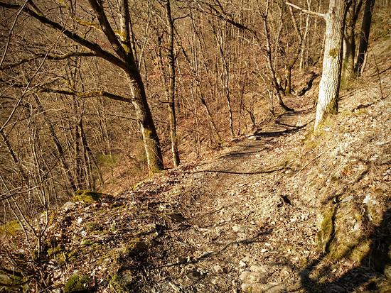 DeFrostwald