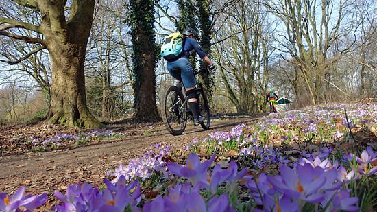 Frühlingsgefühle in der Brunssummerheide (Holland)