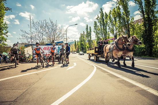 Brauerreipferde sind vermutlich eine der Besonderheiten des Freiburger Bikefestivals