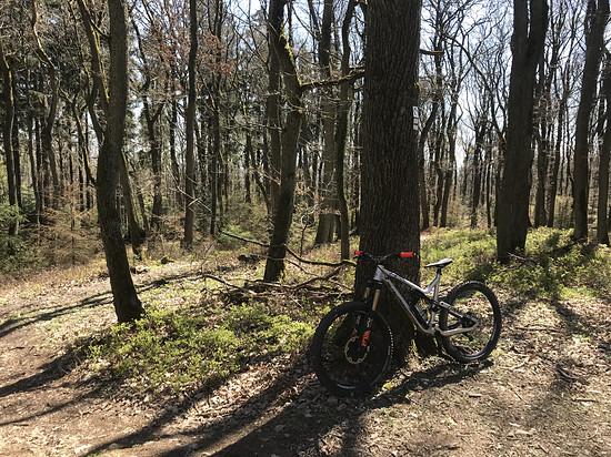 Meta im Wald(1)