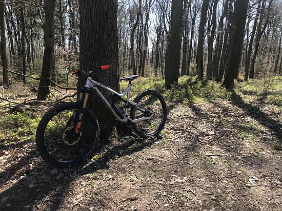 Meta im Wald