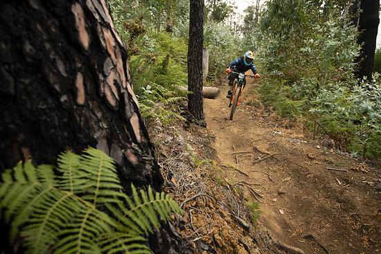 Auf rutschige Steine folgt wieder staubiger Eukalyptus-Wald