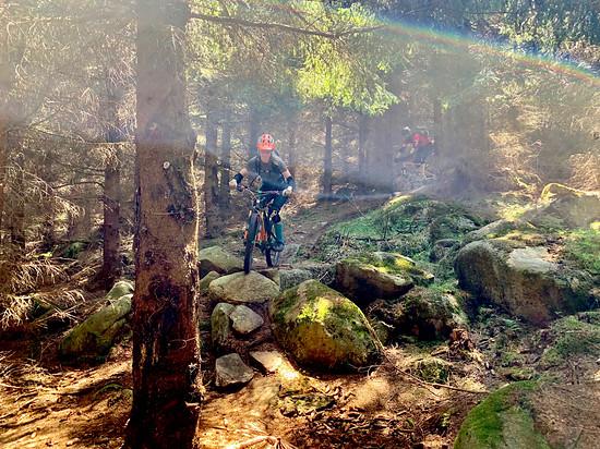 Lichtspiel im Harz