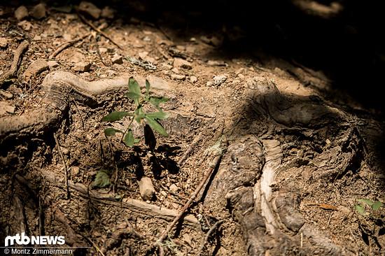 Stattdessen ist die kurze Waldsektion auf knallhartem Boden