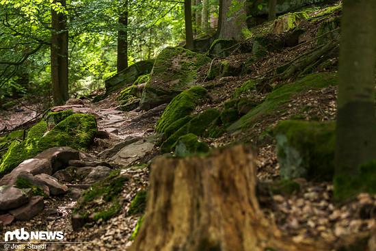 Nur weil im Direktvergleich zum weiterhin populären Enduro 2-3 cm weniger Federweg vorhanden sind, ist man nicht auf Forstwege beschränkt