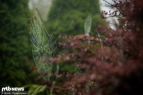 Die Bedingungen im B-Training waren ähnlich feucht wie dieses pittoreske Spinnennetz