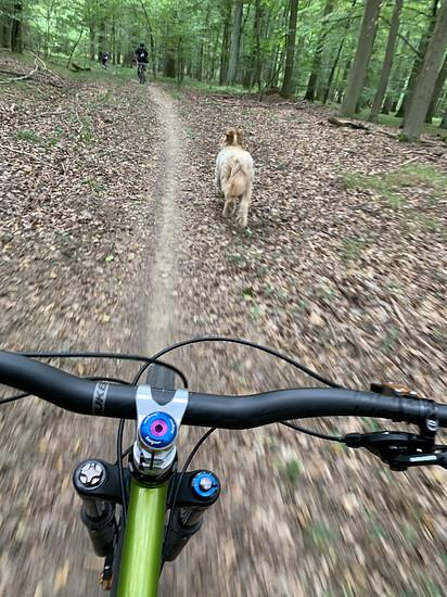 Trailbuddy Simba <3