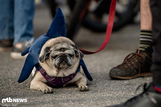 """Diese Hund ist ganz eindeutig Jack """"Shark Attack"""" Moir-Fan!"""