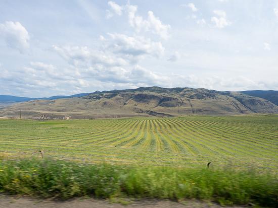 Mit sportlicher Bewässerung bekommt man auch eine Wüste grün