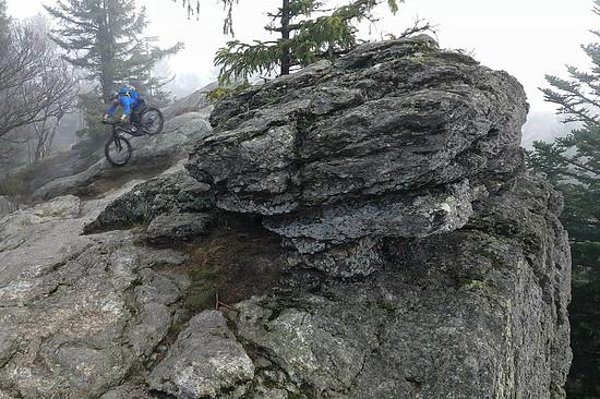 Bayerwald im Nebel