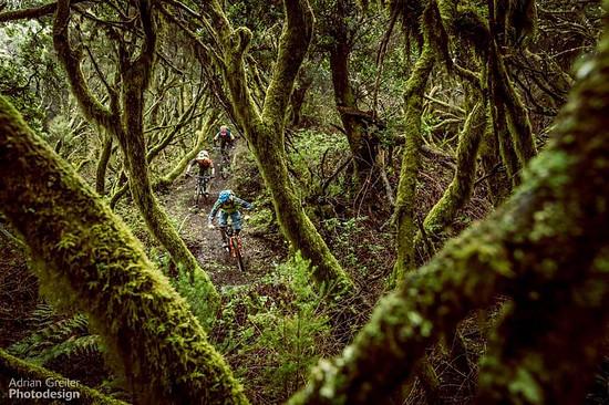 Jungle Ride auf El Hierro