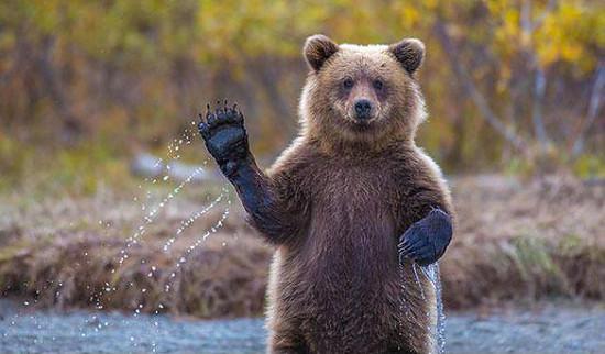 Neulich beim beiken Bär gesehen..