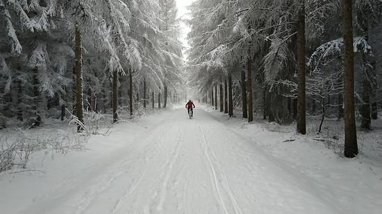 Rabensteiner Wald