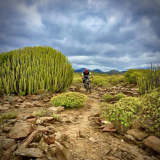 Yegua-trail-gran-canaria
