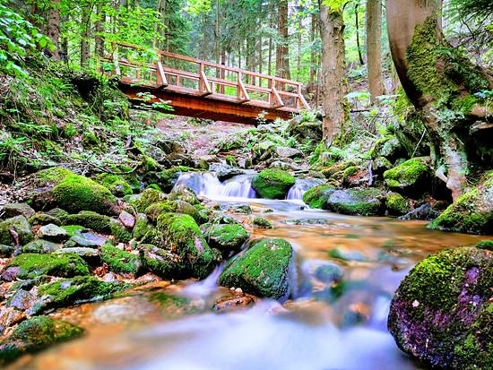Eine der Trailbrücken irgendwo auf einem Flowtrail.