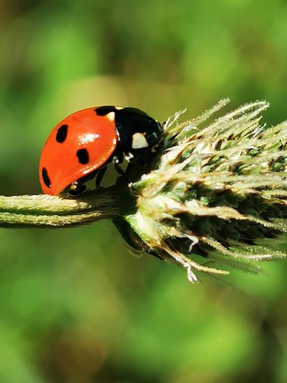 Zeit für die kleinen schönen Dinge der Natur muss man sich auch nehmen