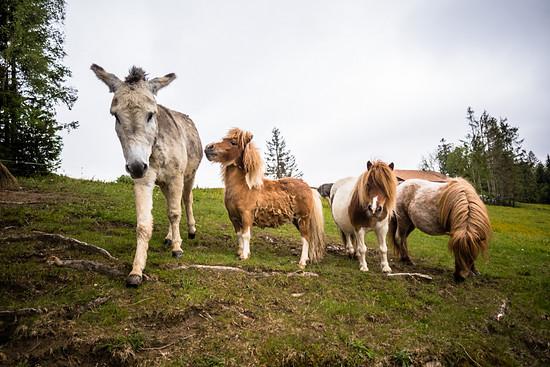 Das Kleinste Pony Der Welt