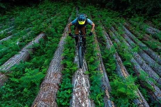 Uphill Farn