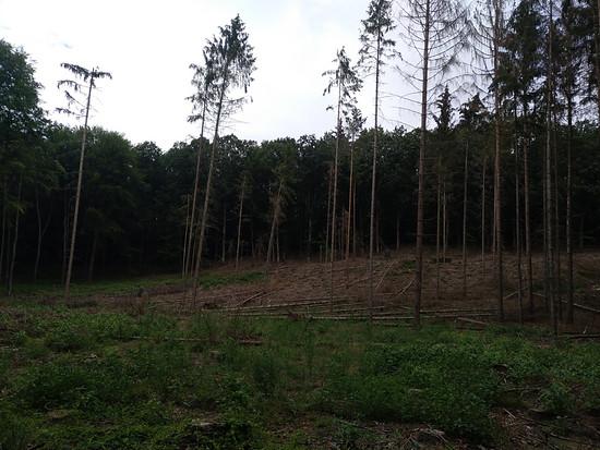 Im Wald - oder was davon übrig ist