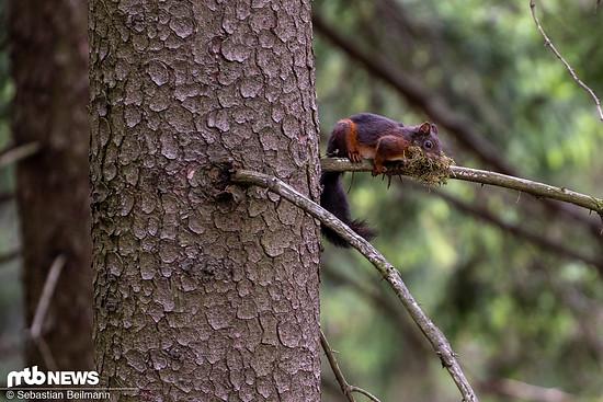 Auch eine kleine Boulder-Session inklusive Eichhörnchen beobachten stand auf dem Plan