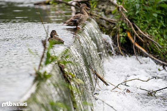 Wildwasser-Feeling für die kleinen Enten