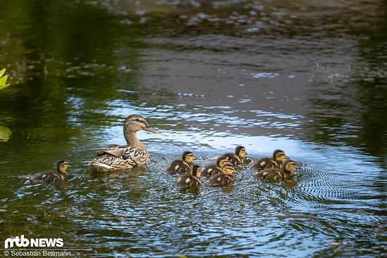 Und dazu noch mit einer kleinen Entenfamilie