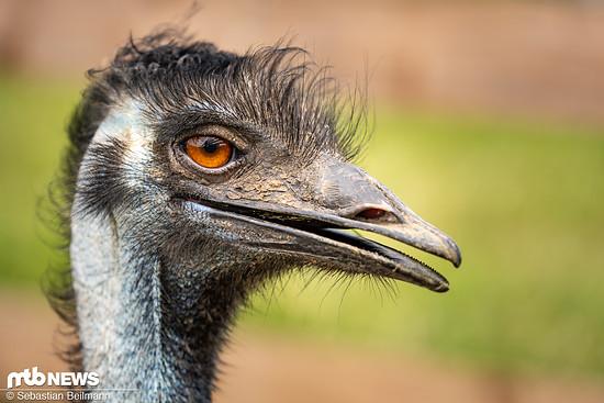 Dieser Emu ...