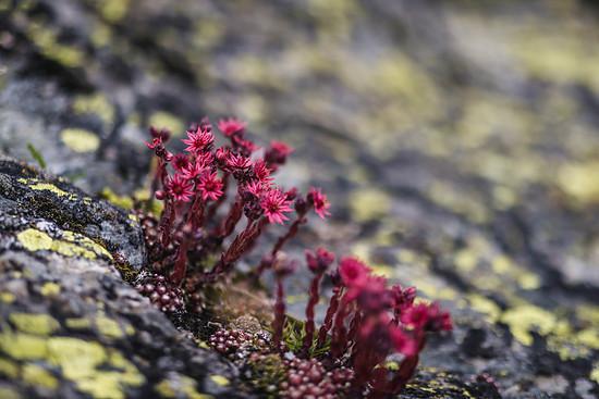 Dem offenen Auge offenbart sich die Schönheit der Natur überall