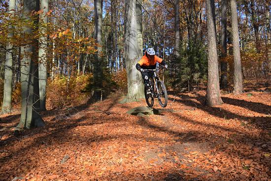 Trailsrunde im Herbstlaub