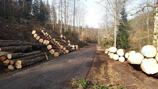 Holzwirtschaft auch