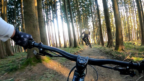 flying through the forest